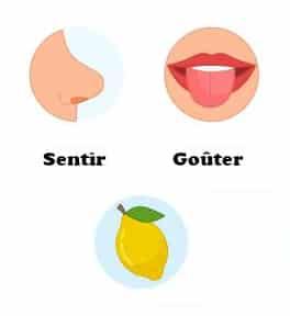 Les sens de l'odorat et du goût