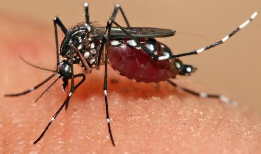 Moustiques et odeurs corporelles