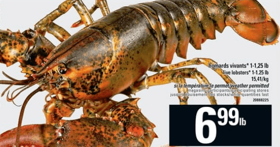 Homards Vivants du 16 au 22 mai 2019