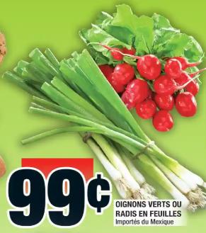 Oignons Verts ou Radis en Feuilles du 20 au 26 février 2020