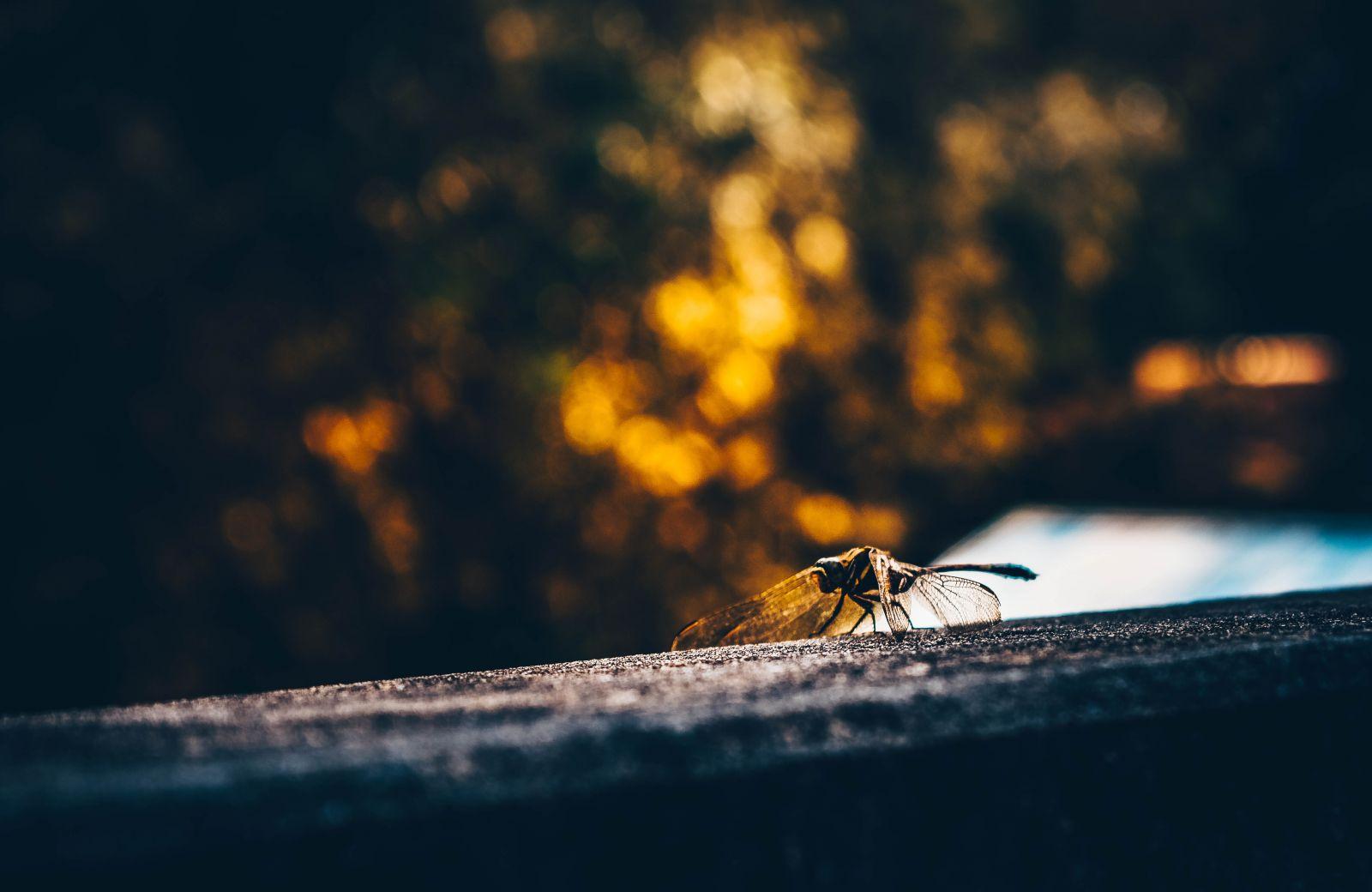 Conte de Lila, la libellule Feu