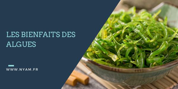 Les bienfaits des algues