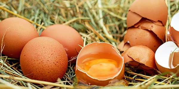 Comment conserver les œufs?