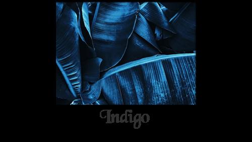 couleur indigo