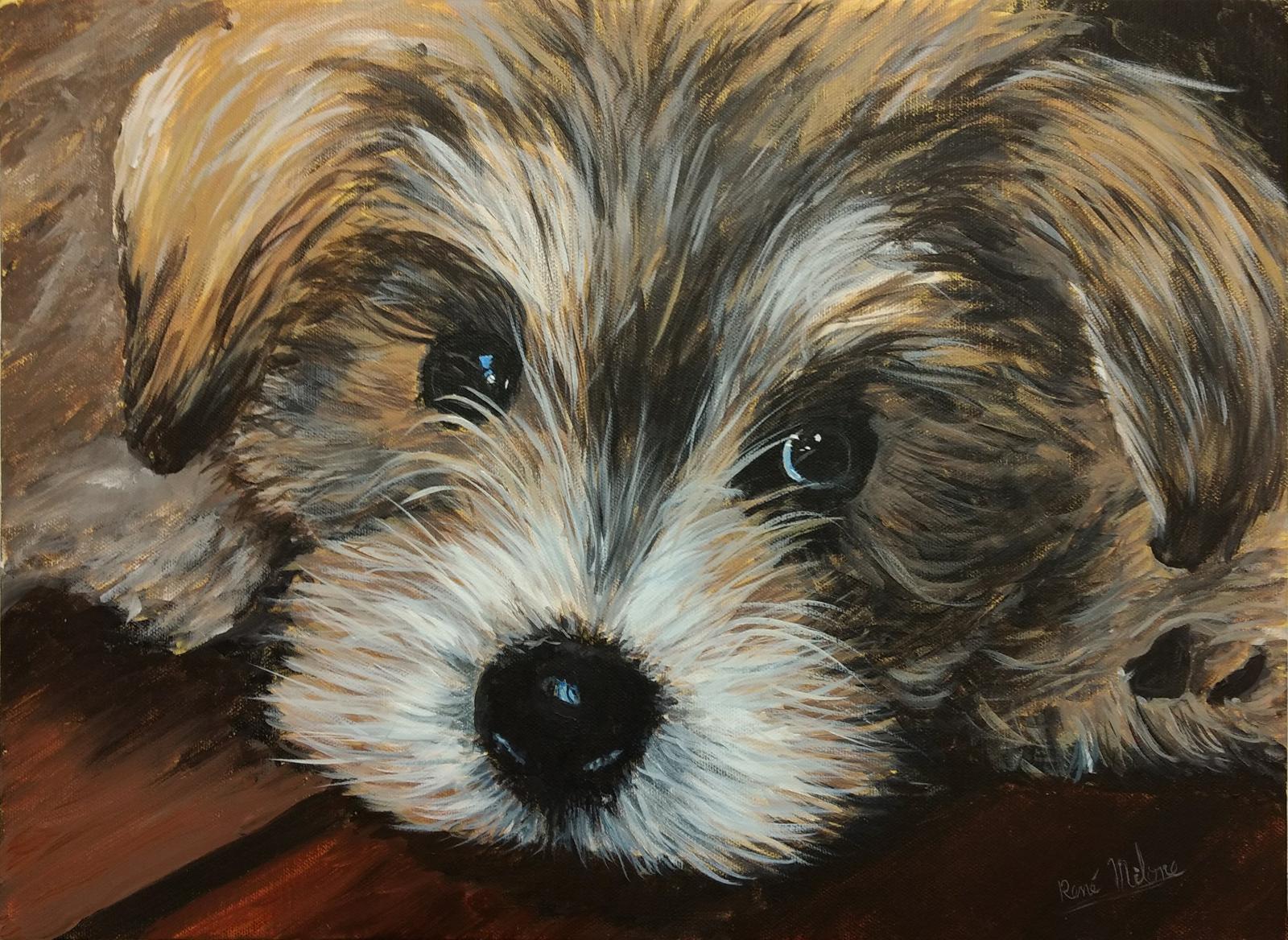 Cette semaine, je vous propose un cours de peinture animalière