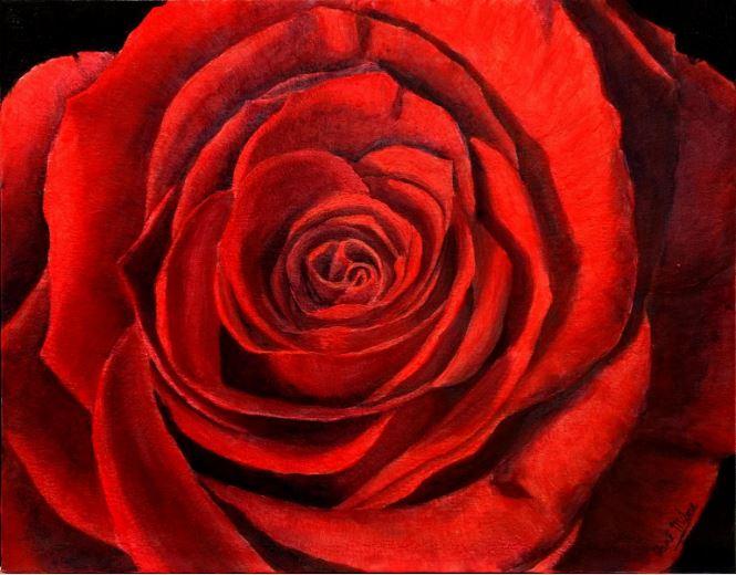 Voici les nouvelles vidéos du cours sur les roses