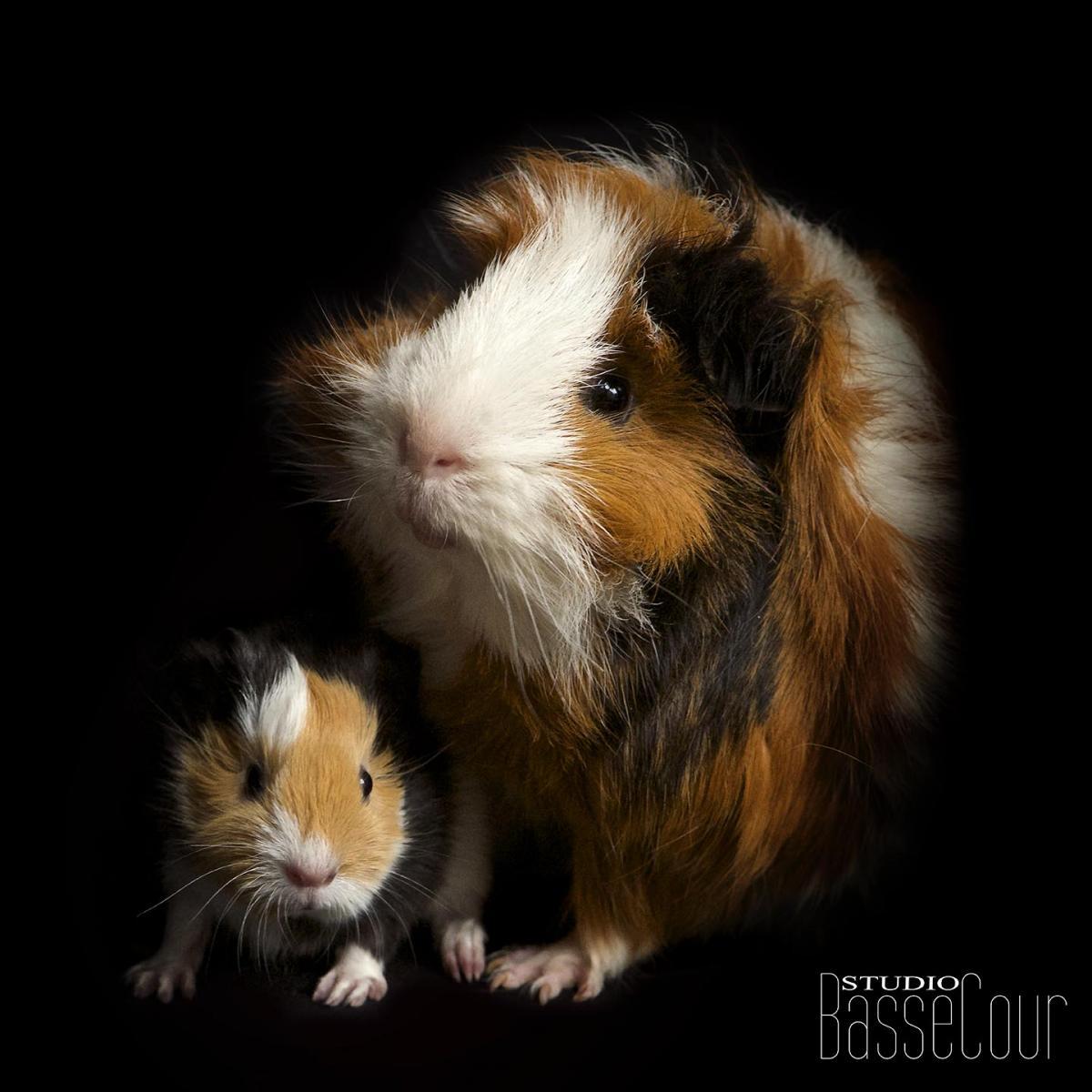 Croquette et son Bébé