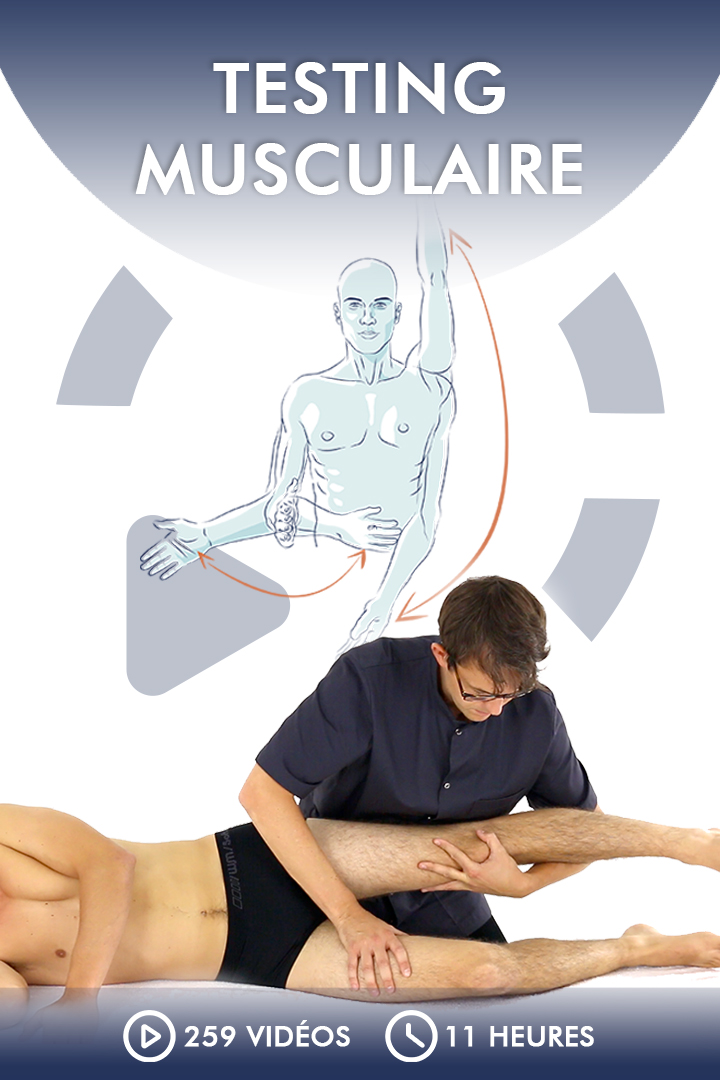 Testing musculaire