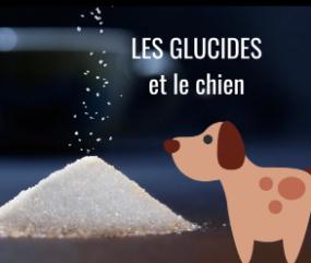 Les glucides et le chien