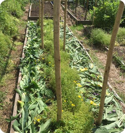 Choisissez votre support ou butte de culture id al pour votre potager en permaculture for Exemple potager permaculture