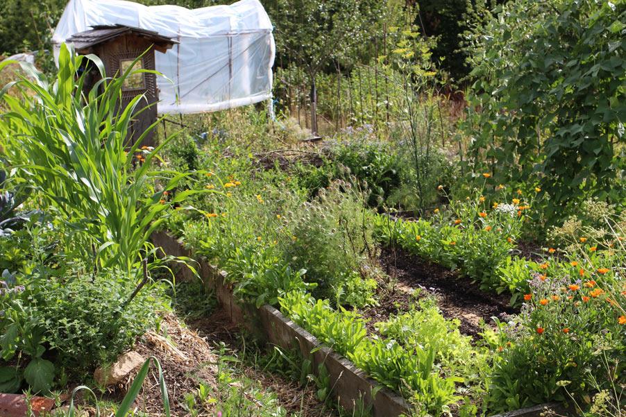 Permaculture en climat froid valuation de cours for Jardin permaculture 2015