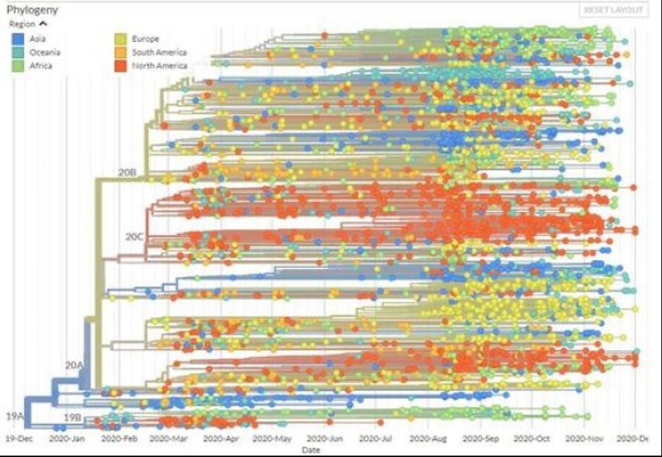 Phylogénie mondiale Sras-CoV-2 dec2019-dec2020