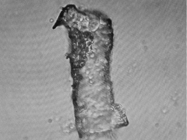 Fibre ouverte longitudinalement avec extrémité cassée et billes contenant du Darpa Hydrogel