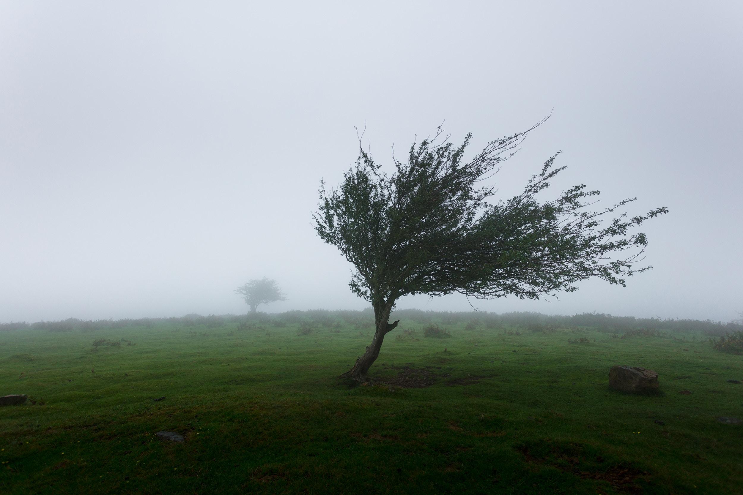 Le vent souffle et balaie tout ce qui ne me sert plus!...