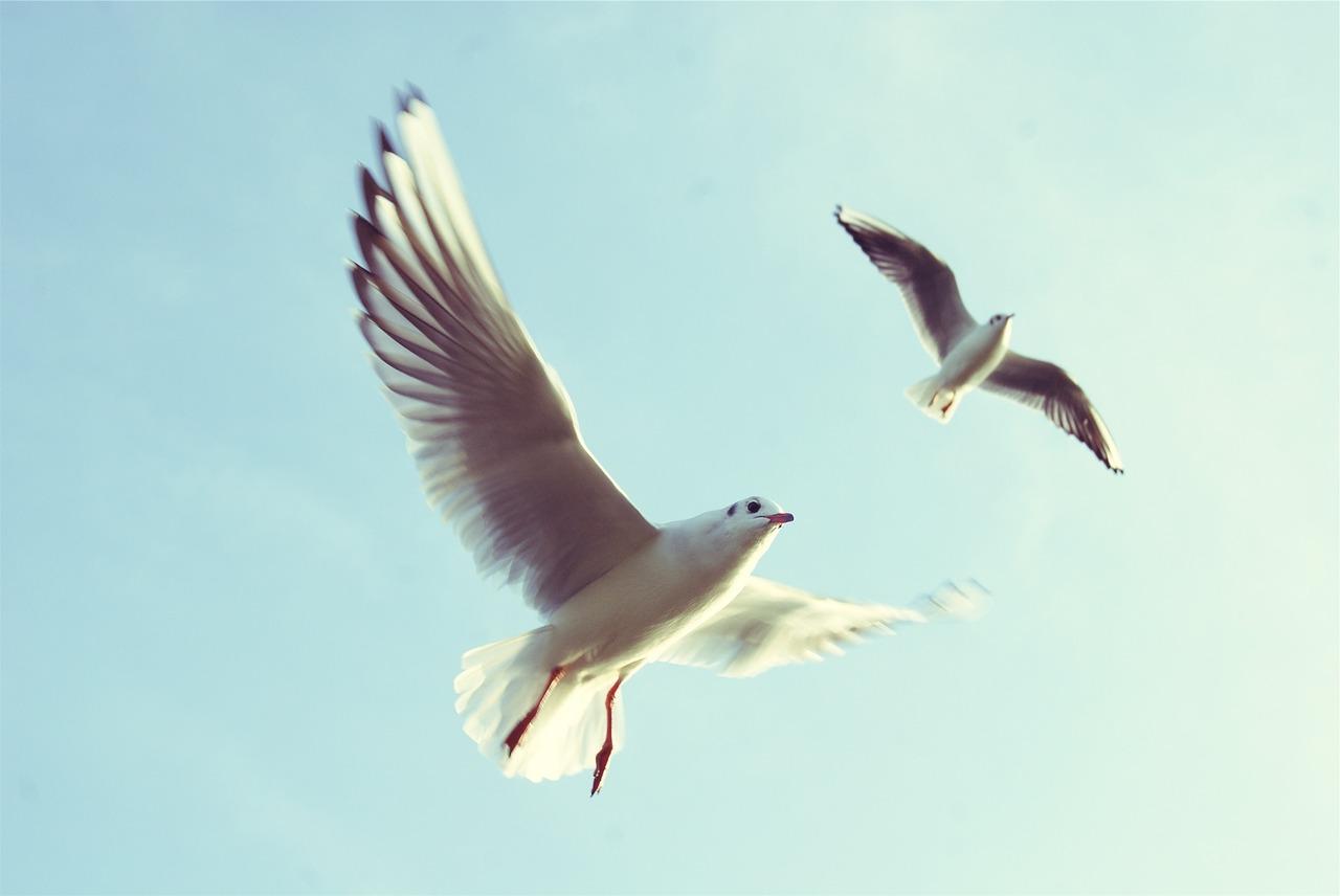 Comment vous sentir mieux mentalement? 👍 Vers un changement positif  - Le Pouvoir est en moi #7