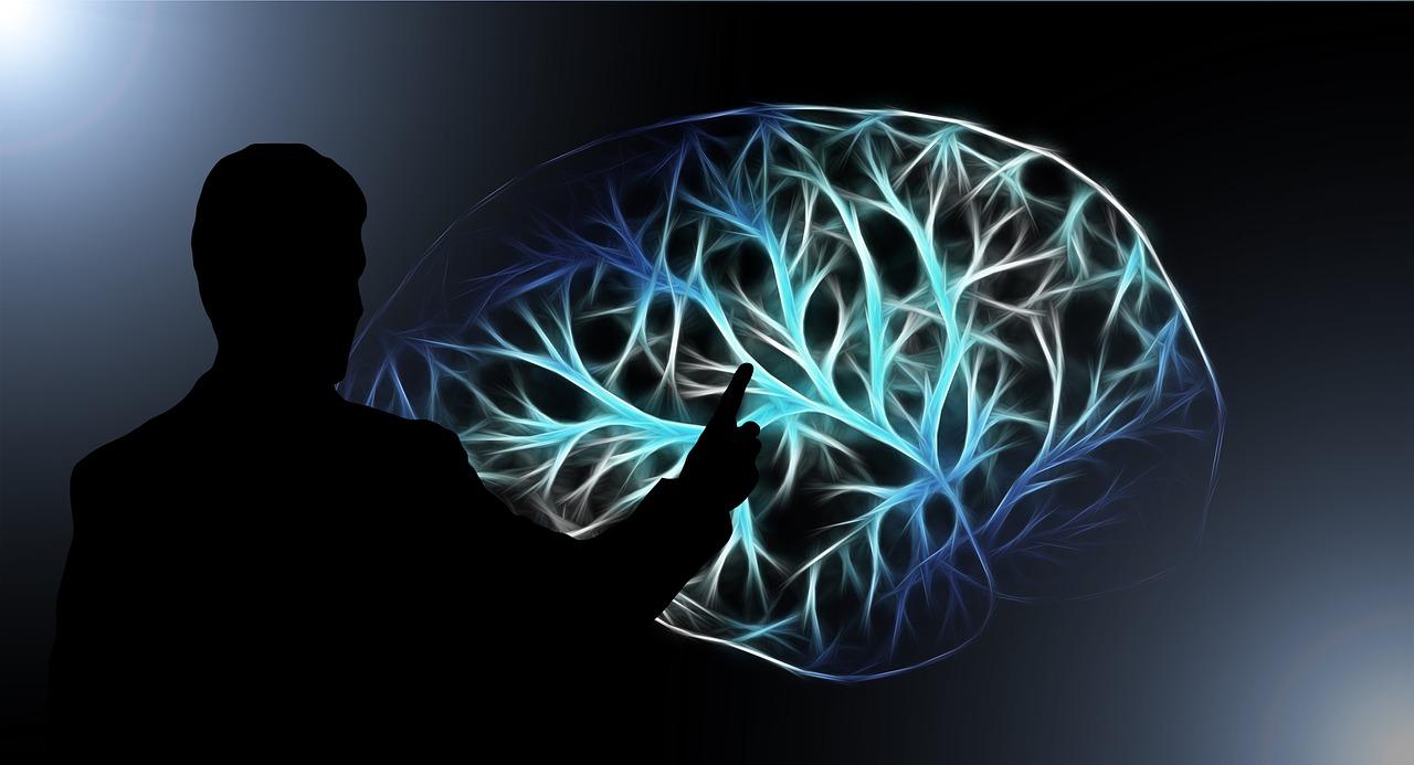 Du neuf au sujet de votre cerveau