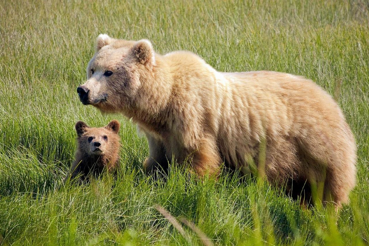 Comment guérir la relation à soi? Ou la symbolique de l'ours...